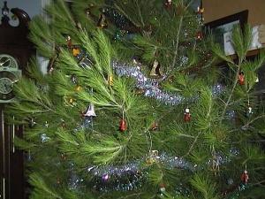 Christmas tree 2005 - closeup